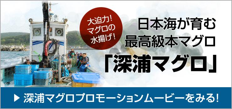 深浦マグロプロモーションムービー深浦マグロ【日本海が育む最高級本マグロ「深浦マグロ」】