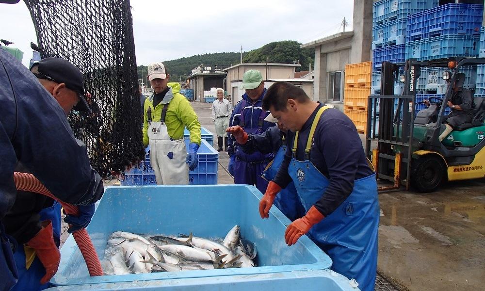 漁業体験05