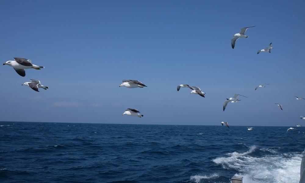 漁業体験04